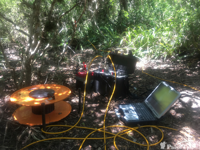 Geoelectrics in the mangrove forest, Mexico